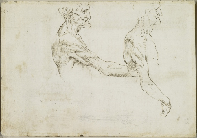 Recto: The surface anatomy of the shoulder and arm. Verso: The vertebral column  c.1510-11